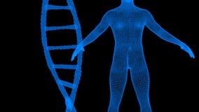 Blaue DNA und menschliches wireframe Hologramm Stockfoto