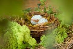 Blaue Eier im Nest Stockfotos