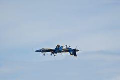 Blaue Engel wandelten Durchlauf um Stockbild