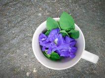 Blaue Erbse des Stilllebens oder Schmetterlingserbse in der Kaffeetasse auf Holz Lizenzfreies Stockfoto