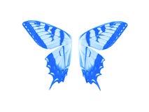 Blaue Farbe des Flügel-Schmetterlinges auf weißem Isolat Stockbilder
