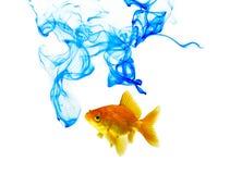 Blaue Farbetinte und Goldfish stockbild