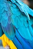 Blaue Feder Lizenzfreie Stockfotografie