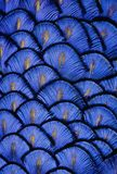 Blaue Federn Lizenzfreie Stockfotos