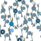 Blaue Feldblumen Stockfotos