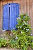 Blaue Fensterläden und Blumen Stockfotografie