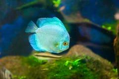 Blaue Fische lizenzfreie stockfotos