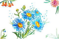 Blaue Gänseblümchen und andere Blumen Lizenzfreie Stockfotografie