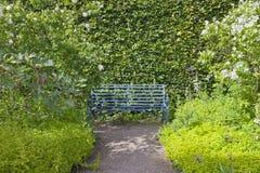 Blaue Gartenbank durch eine belaubte getrimmte Hecke stockfotos