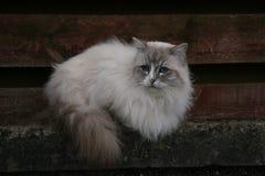 Blaue gemusterte Katze Stockbilder
