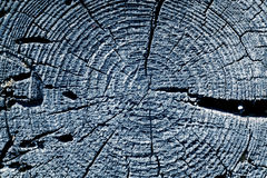 blaue getonte alte Baumschnittbeschaffenheit Stockbild