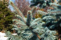Blaue gezierte Zweige Lizenzfreie Stockfotografie
