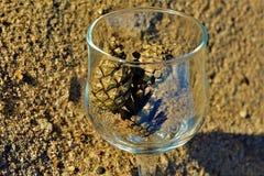 Blaue Gläser mit den geflochtenen Fahrwerkbeinen stockfotos