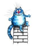 Blaue glückliche Katze auf einem Kamin Stockbild