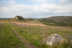 Blaue Glocke Dartmoor Landschaft Lizenzfreie Stockbilder