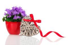 Blaue Glockenblume blüht für Valentinstag mit hölzernem Herzen Stockbilder