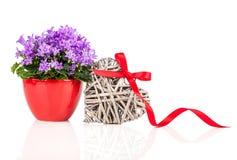 Blaue Glockenblumeblumen für Valentinstag Stockfotos
