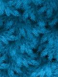 Blaue grüne Niederlassungen eines Pelzbaums, der Fichte oder der Kiefer mit copyspace ENV 10 lizenzfreie abbildung