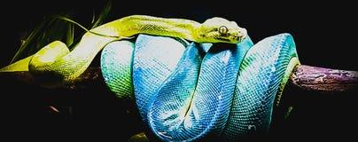 Blaue grüne Schlange stockfotos