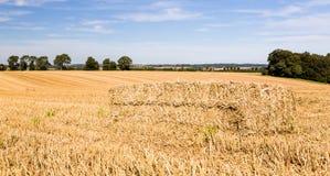 Blaue Himmel über Maisfeldern in England Stockfotografie