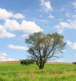 Blaue Himmel Lizenzfreie Stockfotografie