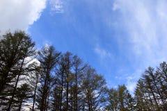 Blaue Himmel in Hokkaido stockbild