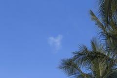 blaue Himmel und Palmblätter Stockfotos