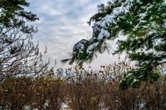 Blaue Himmel und Schnee auf den Büschen Stockfoto