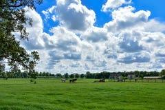 Blaue Himmel und weiße Wolken über einem Pferd bewirtschaften in der Landschaft der Niederlande Stockfotos