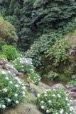 Blaue Hortensie im Park von Achada Nordeste auf Sao Miguel, Azoren Lizenzfreie Stockfotos