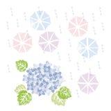 Blaue Hortensie und Regenschirme in der Regenzeit Stockbild