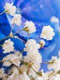 Blaue Hydrangeas und weiße Blenden Stockbild