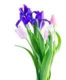 Blaue Iris und pik Tulpen Stockfotos