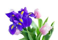 Blaue Iris und pik Tulpen Stockfoto