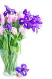 Blaue Iris und pik Tulpen Lizenzfreies Stockbild