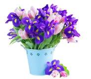 Blaue Iris und pik Tulpen Stockfotografie
