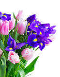 Blaue Iris und pik Tulpen Lizenzfreies Stockfoto