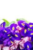 Blaue Iris und pik Tulpen Stockbild