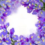 Blaue irise Blumen schließen oben Lizenzfreies Stockbild