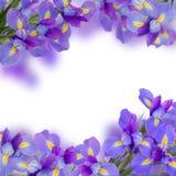 Blaue irise Blumen schließen oben Stockbilder