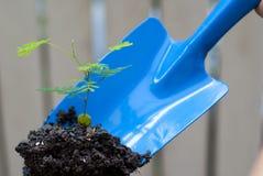 Blaue Kelle, die oben eine Jungpflanze gräbt Lizenzfreie Stockfotografie