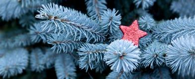 Blaue Kiefernniederlassungen und roter Weihnachtsstern Stockfotografie