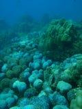 Blaue korallenrote Luftblasen Stockbilder
