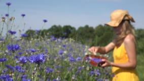 Blaue Kornblumeblüte und unscharfe Kräuterkennerfrauenversammlungskräuter 4K stock footage