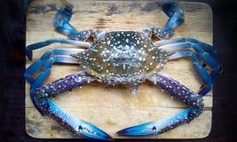 Blaue Krabbe frisch Stockfoto