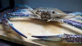 Blaue Krabbe frisch Stockbilder