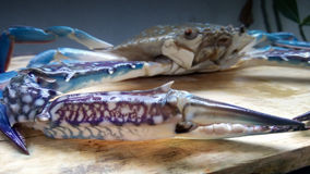 Blaue Krabbe frisch Lizenzfreies Stockbild