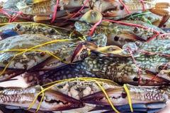 Blaue Krabben frisch Lizenzfreies Stockbild