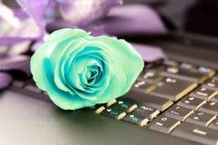 Blaue Liebe Stockfoto