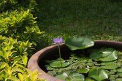 Blaue Lotus Flower Detail lizenzfreie stockfotografie